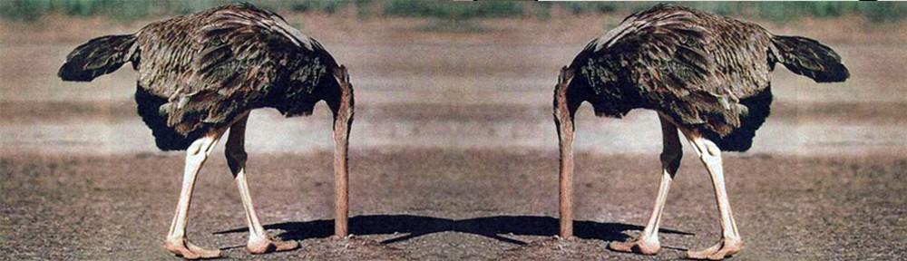 şizofren deve kuşları